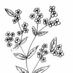 Contoh Gambar Sketsa Bunga Sakura