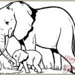 Contoh Gambar Sketsa Gajah