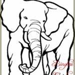 Contoh Gambar Sketsa Hewan Gajah