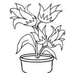 Gambar Sketsa Bunga Dalam Pot Bingkaigambarcom