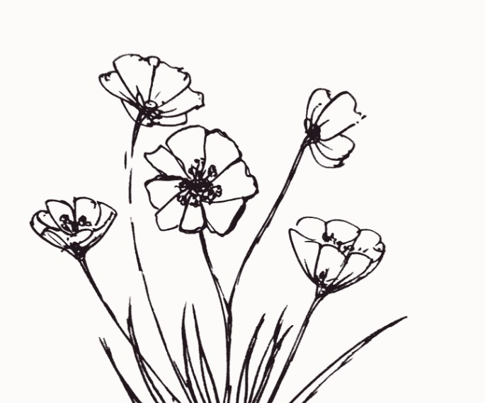 Contoh Sketsa Bunga Anggrek
