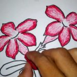 Contoh Sketsa Bunga Kamboja