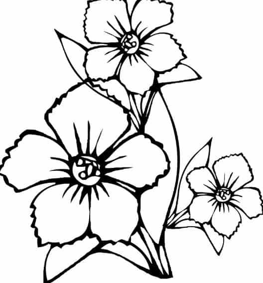 Contoh Sketsa Bunga Melati