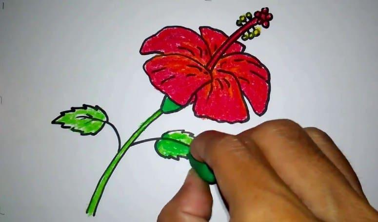 Contoh Sketsa Bunga Sepatu