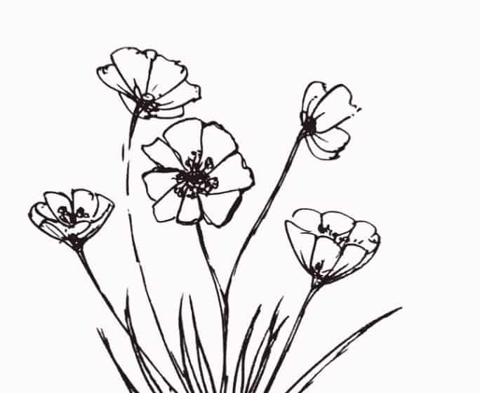 10+ Gambar Sketsa Bunga Melati Cantik, Keren Dan Sederhana ...