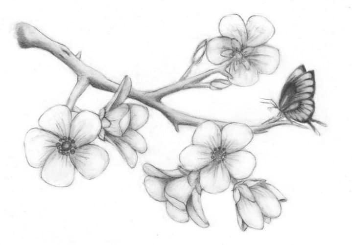 10 Gambar Sketsa Bunga Melati Cantik Keren Dan Sederhana