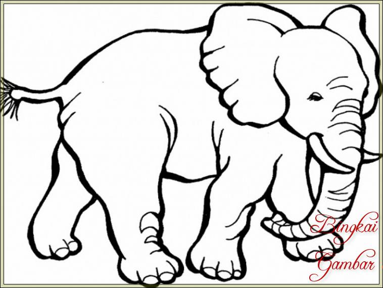 Gambar Gajah Sketsa Pensil