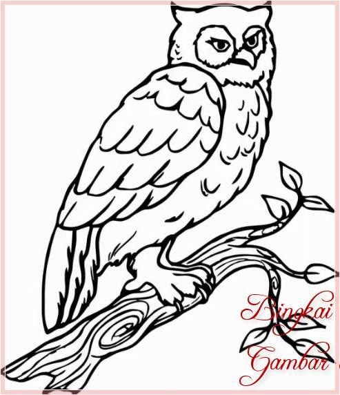Gambar Sketsa Binatang Burung Hantu Bingkaigambarcom