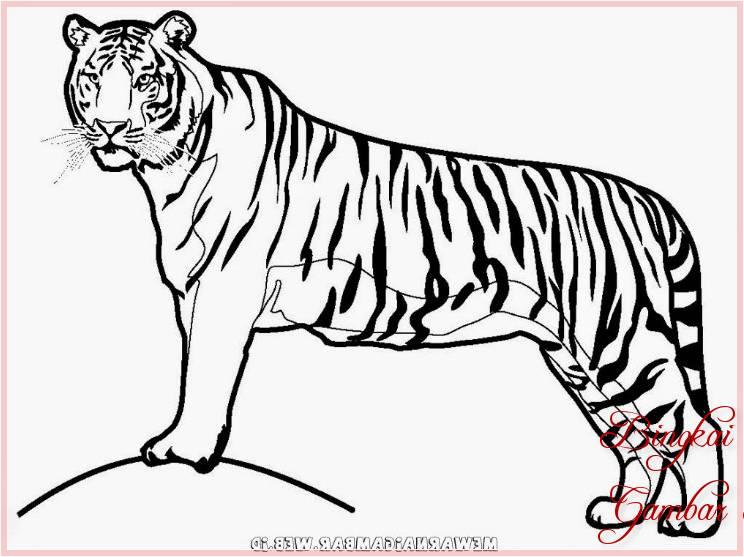 Gambar Sketsa Binatang Harimau