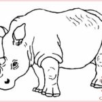 Gambar Sketsa Binatang Hutan