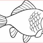 Gambar Sketsa Binatang Ikan
