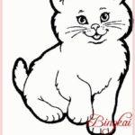 Gambar Sketsa Binatang Kucing