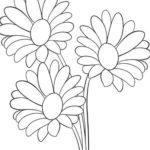 Gambar Sketsa Bunga Aster