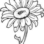 Gambar Sketsa Bunga Daisy