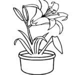 Gambar Sketsa Bunga Dan Pot
