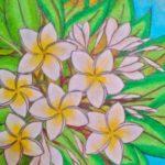 Gambar Sketsa Bunga Kamboja