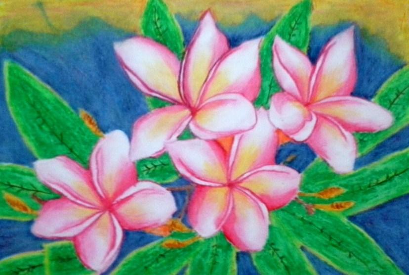 Gambar Sketsa Bunga Kamboja Jepang