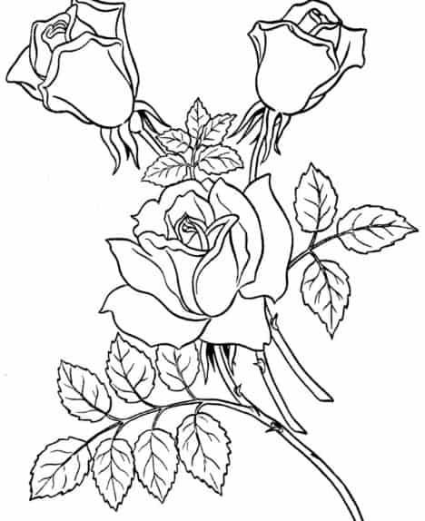 Gambar Sketsa Bunga Mawar Dan Melati