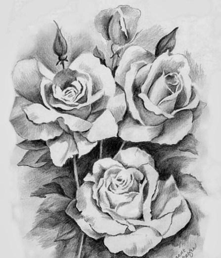 Gambar Sketsa Bunga Mawar Hitam