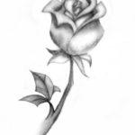 Gambar Sketsa Bunga Mawar Layu
