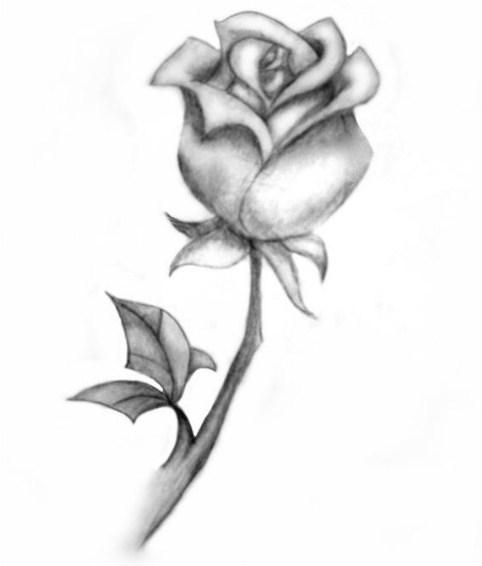 23 Gambar Sketsa Bunga Mawar Terindah Dan Cara Menggambarnya