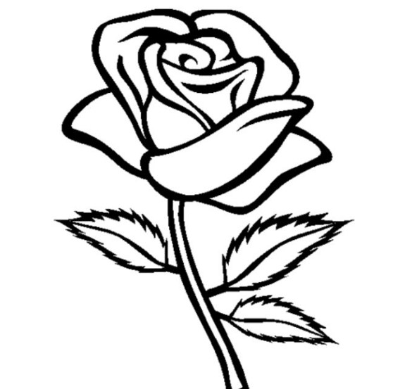 Gambar Sketsa Bunga Mawar Mekar
