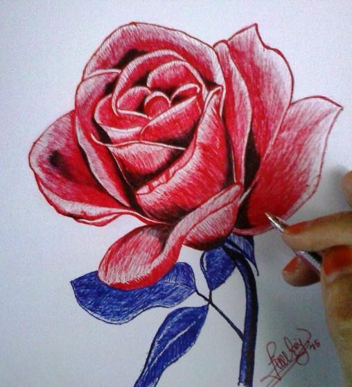 Gambar Sketsa Bunga Mawar Merah