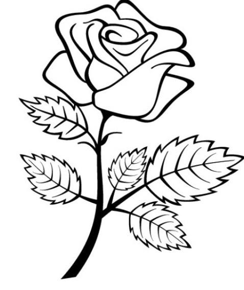 Gambar Sketsa Bunga Mawar Mudah