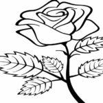Gambar Sketsa Bunga Mawar Sederhana