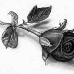 Gambar Sketsa Bunga Mawar Yang Cantik