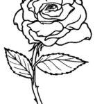 Gambar Sketsa Bunga Mawar Yang Indah