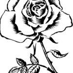 Gambar Sketsa Bunga Mawar Yang Mudah