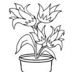 Gambar Sketsa Bunga Tulip Mekar