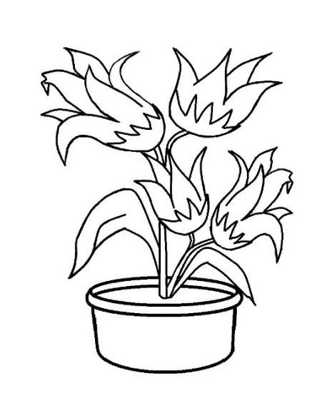 10 Gambar Sketsa Bunga Tulip Sederhana Warna Dan 3d Bingkaigambar Com