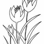 Gambar Sketsa Bunga Tulip Yang Mudah