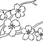 Gambar Sketsa Bunga Yang Gampang Ditiru