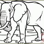 Gambar Sketsa Gajah Sedang Makan