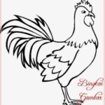 Gambar Sketsa Hewan Ayam