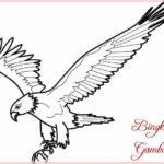 Gambar Sketsa Hewan Burung Elang