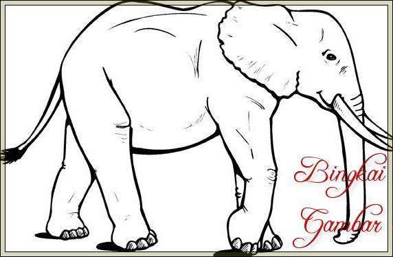 Gambar Sketsa Hewan Gajah