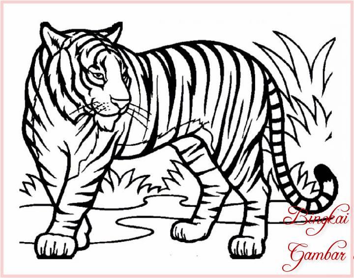 Gambar Sketsa Hewan Harimau