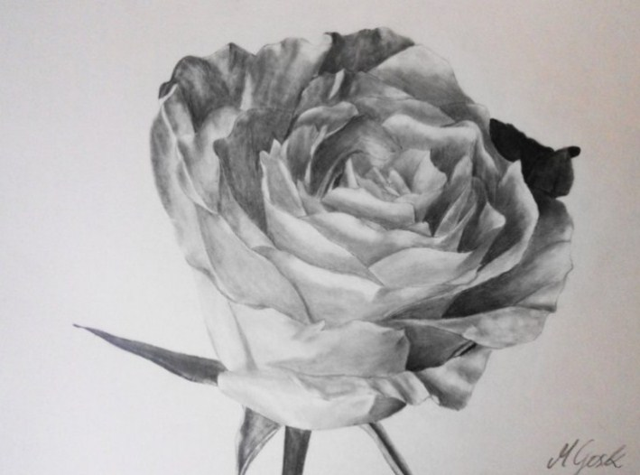Gambar Sketsa Kelopak Bunga Mawar