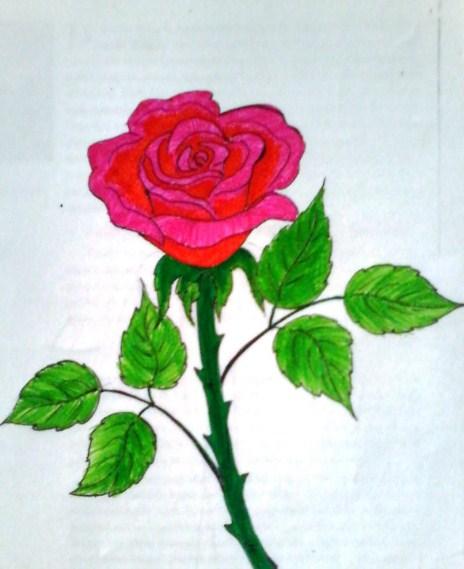 Gambar Sketsa Lukisan Bunga Mawar
