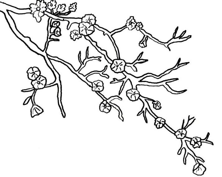 Gambar Sketsa Pemandangan Bunga Sakura
