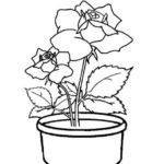 Gambar Sketsa Pot Bunga