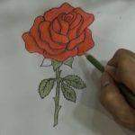 Gambar Sketsa Setangkai Bunga Mawar