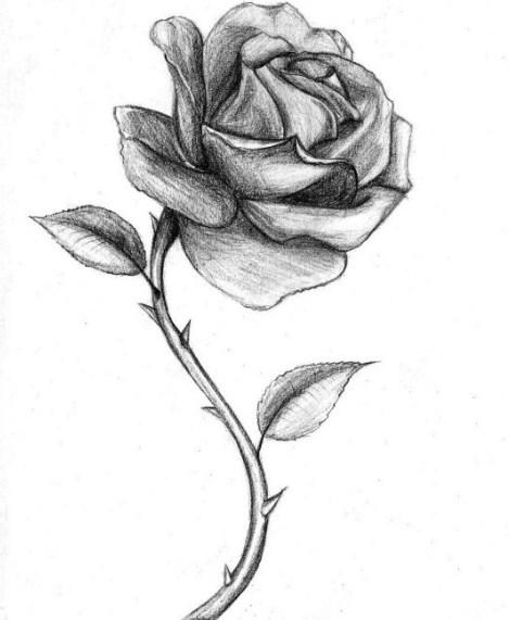 Gambar Sketsa Setangkai Mawar Merah