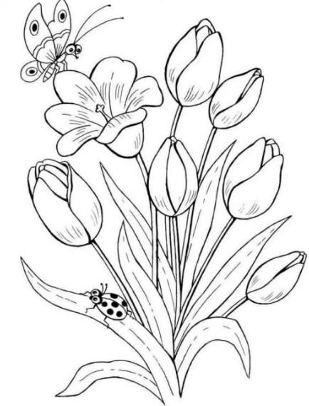 Sketsa Bunga Anggrek Putih