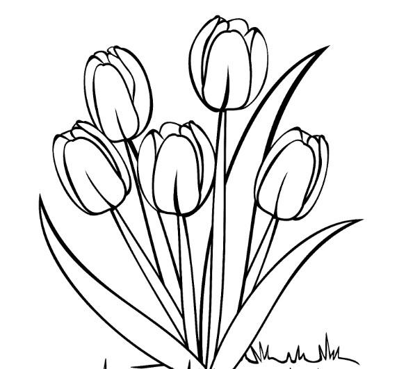 Sketsa Bunga Anggrek