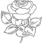 Sketsa Bunga Mawar Yang Mudah Digambar
